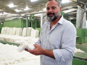 Sedat with ginned cotton